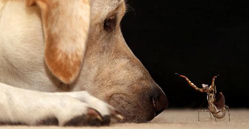 Bescherm je hond tegen dodelijke insecten!
