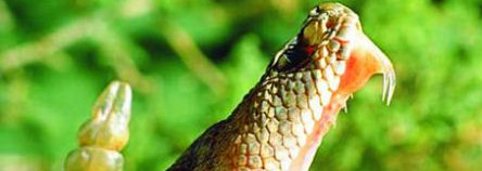 slangen ibiza