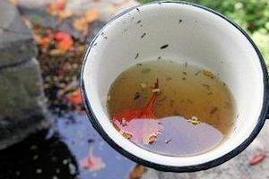 muggenlarve