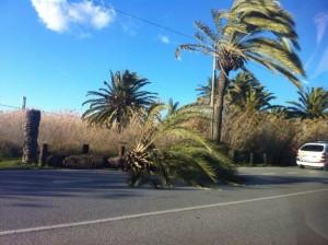 palm-afgebroken