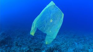 plastic-zak-zee